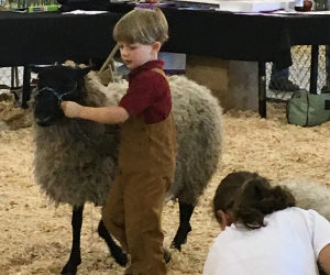 Appletree Farm at Gotland Sheep Shows